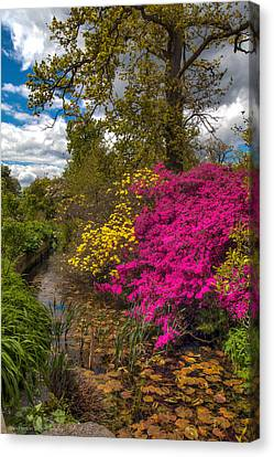 Wisley Garden Canvas Print by Ross Henton