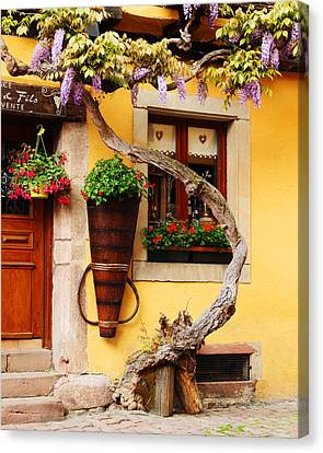 Wisteria In Bloom Canvas Print - Wisteria And Yellow Wall In Alsace France by Greg Matchick