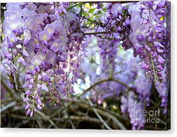 Wisteria Dream Canvas Print by Cathy Dee Janes