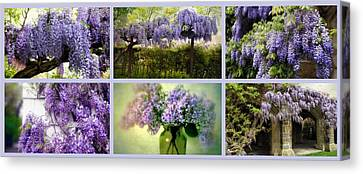Wisteria Collection Canvas Print by Jessica Jenney