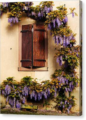 Wisteria Encircling Shutters In Riquewihr France Canvas Print by Greg Matchick