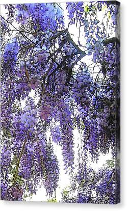 Canvas Print featuring the photograph Wisteria - Fun Version 3 by Jodie Marie Anne Richardson Traugott          aka jm-ART