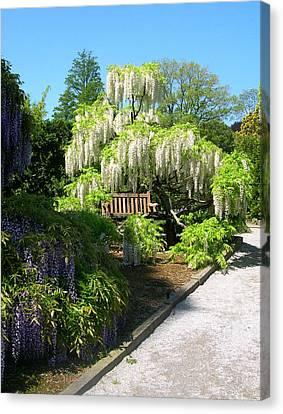 Wisteria In Bloom Canvas Print - Wisteria Garden by Susan Maxwell Schmidt