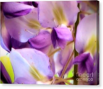Wisteria Kisses Canvas Print by Roxy Riou