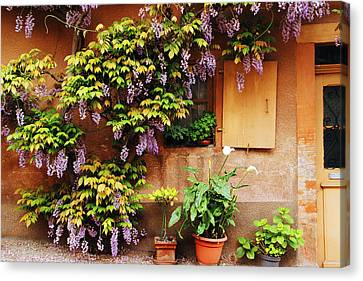 Wisteria On Home In Zellenberg France Canvas Print by Greg Matchick