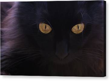 Witchery Canvas Print by Hazel Billingsley