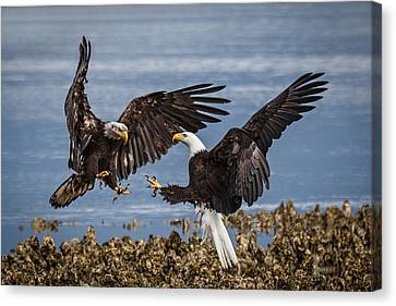 With Talons Bared Canvas Print