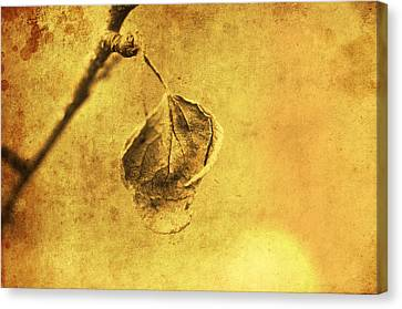 Withered Leaf Art Style Canvas Print by Tommytechno Sweden