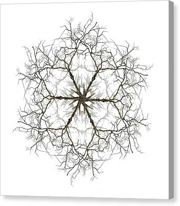 Love Laces Canvas Print - Within by Debra and Dave Vanderlaan