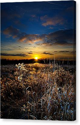 Within Canvas Print by Phil Koch