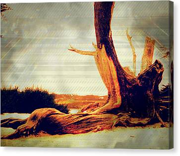 Withstanding The Storms Canvas Print