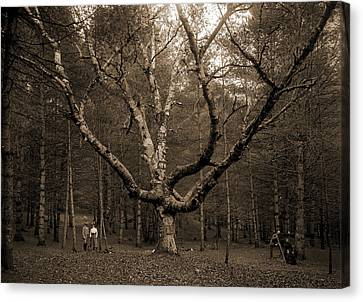 Wizard Tree, Cathedral Woods, North Conway, White Canvas Print