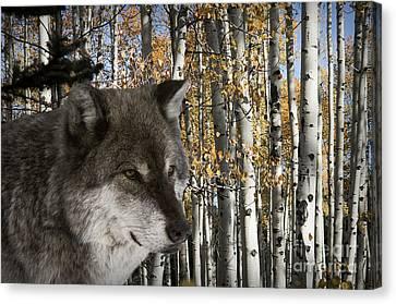 Wolf-animals-image 7 Canvas Print by Wildlife Fine Art