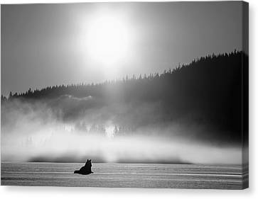 Wolf Basking In Sunlight Near Juneau Canvas Print