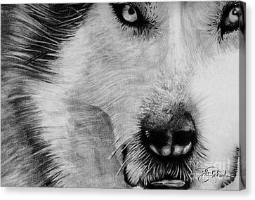 Huskies Canvas Print - Wolf by Bill Richards