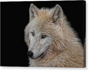 Wolf Bride Canvas Print by Joachim G Pinkawa