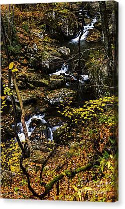 Wolf Creek Cascade Canvas Print by Thomas R Fletcher