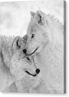 Wolf Love Black And White Canvas Print