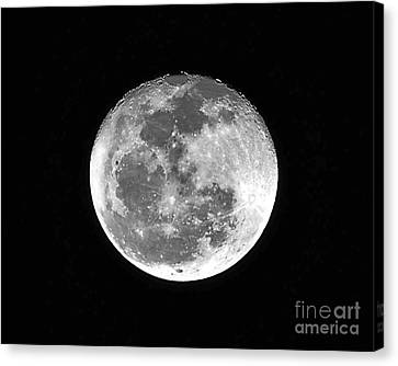 Wolf Moon Waning Canvas Print by Al Powell Photography USA