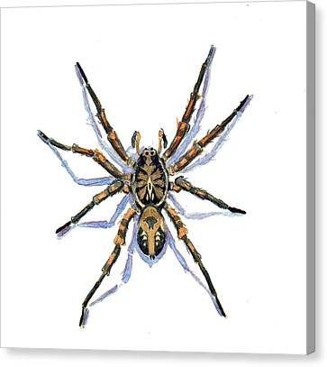 Wolf Spider Canvas Print by Katherine Miller