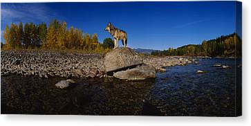 Wolf Standing On A Rock Canvas Print by Panoramic Images