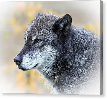 Canvas Print featuring the photograph Wolf by Steve McKinzie