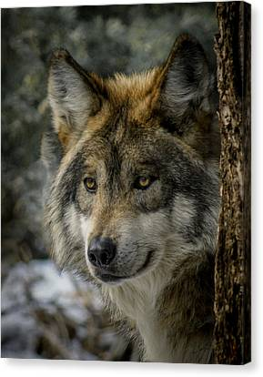 Wolf Upclose 2 Canvas Print