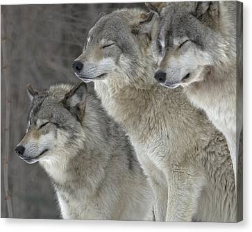 Wolf Zen Canvas Print by Rudy Pohl