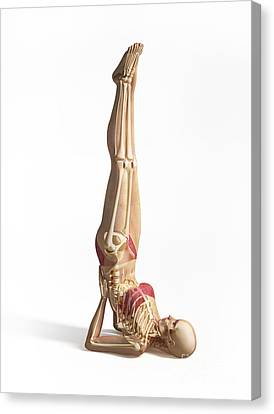 Woman Doing Gymnastics On The Floor Canvas Print by Leonello Calvetti