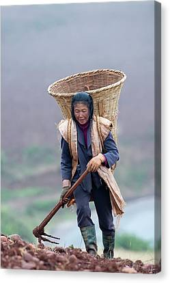 Working Women Canvas Print - Woman Farm Worker Harvesting Potatoes by Tony Camacho
