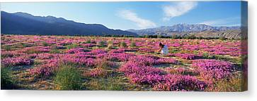Woman In A Desert Sand Verbena Field Canvas Print by Panoramic Images