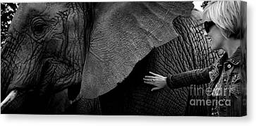 Woman Touching An Elephant Canvas Print