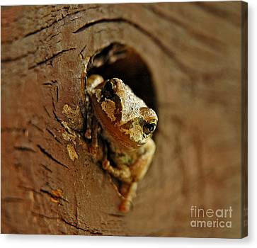 Canvas Print featuring the photograph Wonder Frog by Nick  Boren