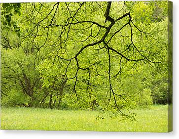 Wonderful Green Colors Of Spring Canvas Print by Matthias Hauser
