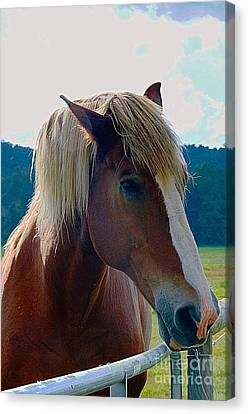 Wonderful Horse Canvas Print
