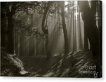 Wonderful Morning Light And Shadows - Giving Thanks To God .    Viewed 231 T Canvas Print by  Andrzej Goszcz