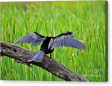 Wonderful Wings Canvas Print by Al Powell Photography USA