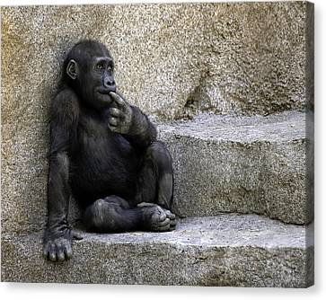 Wondering What To Do Next Canvas Print by Gary Neiss