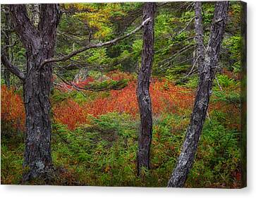 Wonderland Canvas Print by Darylann Leonard Photography