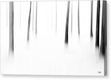 Wonderland Canvas Print by Scott Pellegrin