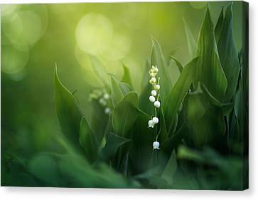 Wonders Of Spring Forest Canvas Print by Magda  Bognar