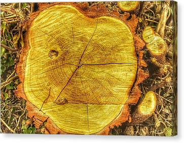 Wood Canvas Print by Daniel Precht