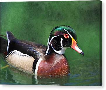 Wood Duck Canvas Print by Angie Vogel