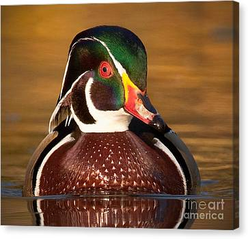 Canvas Print featuring the photograph Wood Duck by Jerry Fornarotto