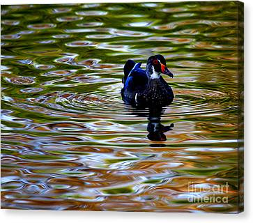 Canvas Print featuring the photograph Wood Duck Reflections by John F Tsumas