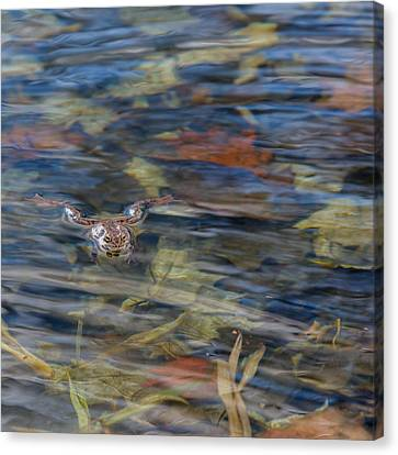 Frog Canvas Print - Wood Frog Square by Bill Wakeley