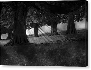 Canvas Print featuring the photograph Wood I Dream by Stewart Scott