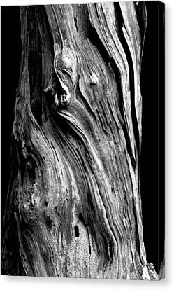 Wood Canvas Print by Shane Holsclaw