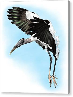 Wood Stork Canvas Print by Roger Hall