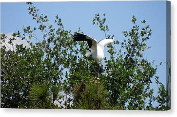 Canvas Print featuring the photograph Wood Stork by Ron Davidson